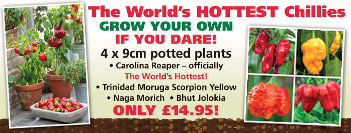 World's Hottest Chilli Collection