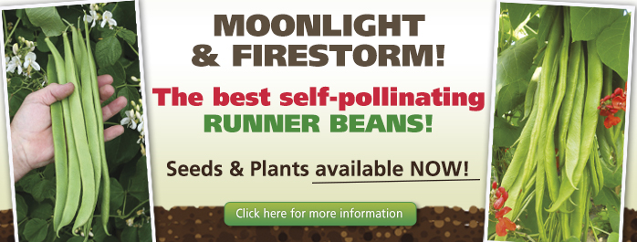 Moonlight and Firestorm Runner Beans