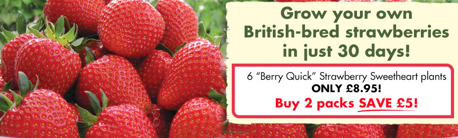 Grow your own strawberries in 30 days.