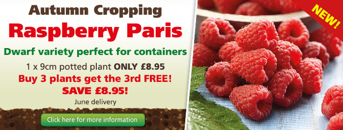 Autumn Cropping Raspberry Paris