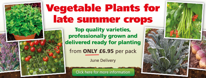 Vegetable Plants For Late Summer Crops
