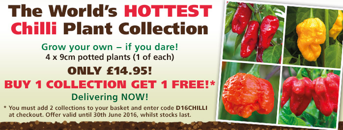 Worlds Hottest Chilli Collection